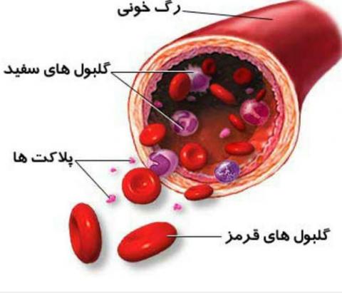 عوارض دارو برمغز و سلول های خونی